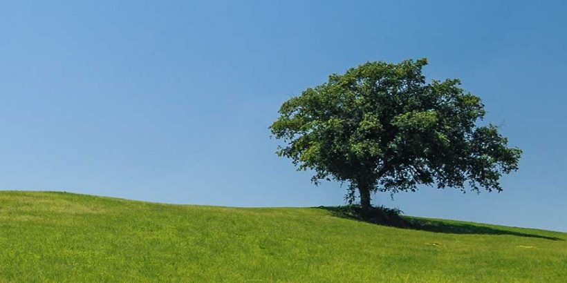 tree880